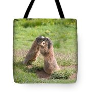 Young Marmots Tote Bag