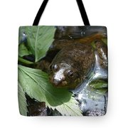 Young Mill Lake Frog II Tote Bag