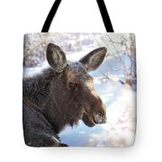 Young Moose Resting Tote Bag