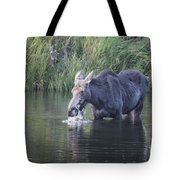 Young Moose Tote Bag