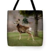 Young Mule Deer Tote Bag