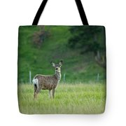 Young Mule Deer Tote Bag