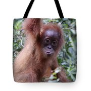 Young Orangutan Kiss Tote Bag
