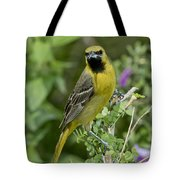 Young Orchard Oriole Tote Bag