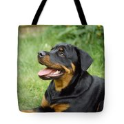 Young Rottweiler Tote Bag