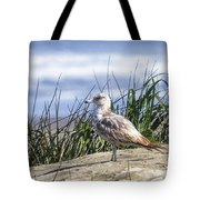 Young Seagull No. 2 Tote Bag