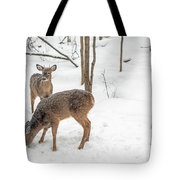 Young Spike Buck And Doe Whitetail Deer In Snowy Woods Tote Bag