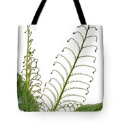 Young Spring Fronds Of Silver Tree Fern On White Tote Bag