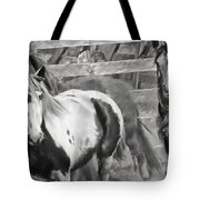 Young Stallions Tote Bag
