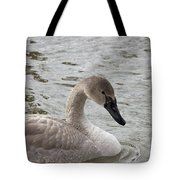 Young Trumpeter Tote Bag