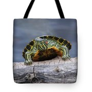 Young Turtle Tote Bag