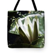 Young Water Lily Tote Bag