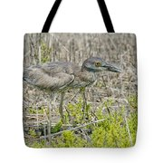 Young Yellow-crowned Night Heron Tote Bag