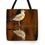 Youthful Reflections Tote Bag