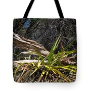 Pedernales Park Texas Yucca By The Dead Tree Tote Bag