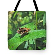 Zabulon Skipper Butterfly - Poanes Zabulon - Female Tote Bag