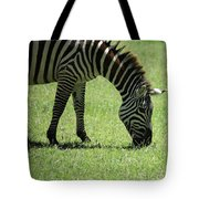 Zebra Eating Grass Tote Bag