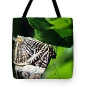 Zebra Long-wing Butterfly  Tote Bag