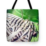 Zebra Long-wing Close-up Tote Bag