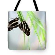 Zebra Longwing Butterflies Mating Tote Bag