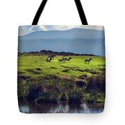 Zebras On Green Grassy Hill. Ngorongoro. Tanzania Tote Bag