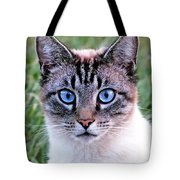 Zing The Cat Looking At Us Tote Bag