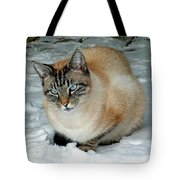 Zing The Cat On The Porch In The Snow 2 Tote Bag