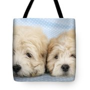 Zuchon Teddy Bear Dogs, Lying Tote Bag