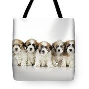 Zuchon Teddy Bear Puppy Dogs Tote Bag