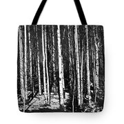 Aspen Tree Trunks Tote Bag