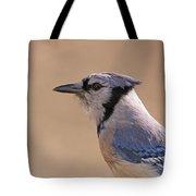 Blue Jay Posing Tote Bag