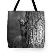 Red Squirrel In Bw Tote Bag