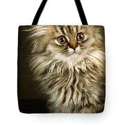 Startled Persian Kitten Tote Bag