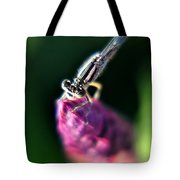 0002 Dragonfly On A Salvia Burgundy Candle Tote Bag