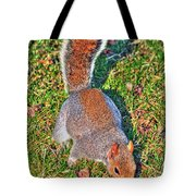 08 Grey Squirrel Sciurus Carolinensis Series Tote Bag