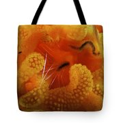 1 Cm Yellow Tube Polyp With A Small Tote Bag