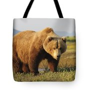 A Brown Grizzly Bear Ursus Arctos Tote Bag