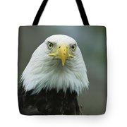 A Close View Of An American Bald Eagle Tote Bag