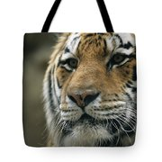 A Close View Of The Face Of Khuntami Tote Bag