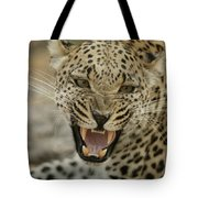A Female Leopard, Panthera Pardus Tote Bag