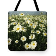 A Field Filled With Daisies In Bloom Tote Bag