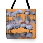 A Flock Of Migratory Flamingos Roost Tote Bag