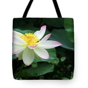 A Pink Tipped White Lotus Tote Bag