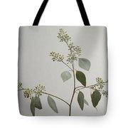 A Seeded Eucalyptus Eucalyptus Cinerea Tote Bag