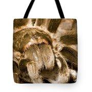 A Tarantula Living In Mangrove Forest Tote Bag