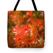 Acer Leaves Tote Bag