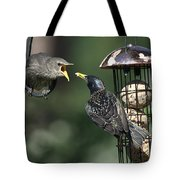 Adult Starling Feeds A Juvenile Tote Bag