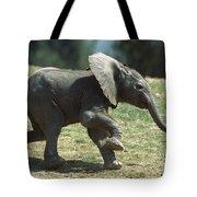 African Elephant Loxodonta Africana Tote Bag
