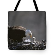 An American Bald Eagle And Chick Tote Bag