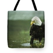 An American Bald Eagle Stares Intently Tote Bag